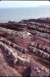 Above: on the eastern coast of Anglesey, Old Red Sandstone crops out near to the popular beach at Traeth Lligwy. The characteristic red-brown colour is evident. Photos : John Conway