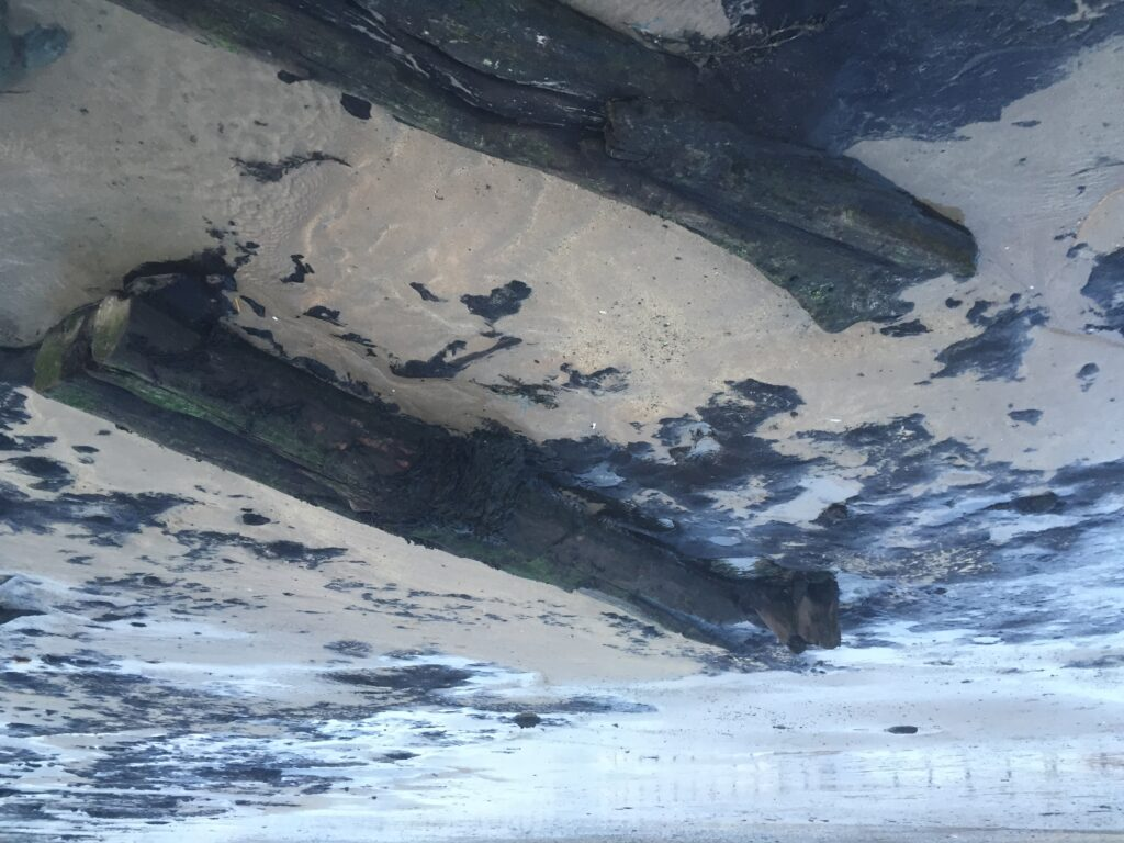 fallen trees, Trearddur beach